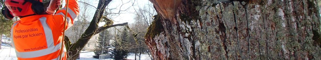 Profesionālas rūpes par kokiem